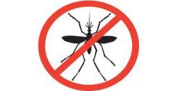 Mosquito clipart prevention disease
