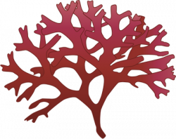 Algae clipart moss