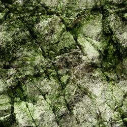 Moss clipart algae