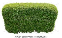 Moss clipart bush