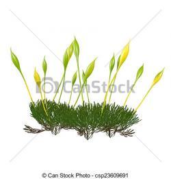 Moss clipart gress
