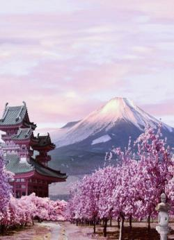 Mount Fuji clipart cherry blossom