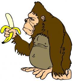 Chimpanzee clipart gorilla