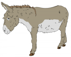 Sleleton clipart donkey