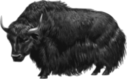 Muskox clipart transparent background