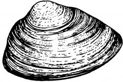 Clams clipart mussel