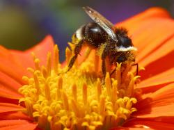 Nectar clipart april