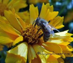 Nectar clipart pollen