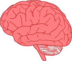 Nerves clipart brain