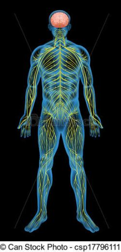 Nerves clipart human being