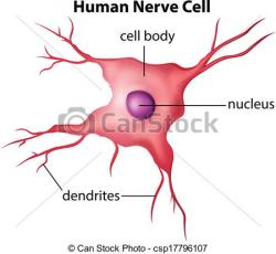 Neuron clipart body cell