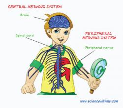 Nerves clipart nervous kid