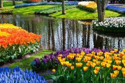 Netherlands clipart tulip garden