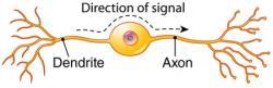 Neuron clipart bipolar