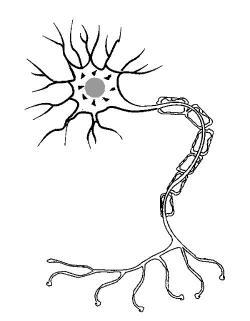 Neuron clipart