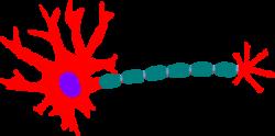Neuron clipart logo