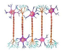 Neuron clipart neurology
