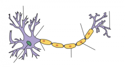 Neuron clipart psychology brain