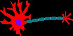 Synapse clipart Neuron Clipart