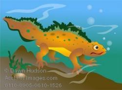 Newt clipart cartoon
