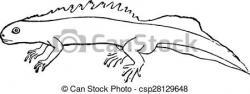 Newt clipart triton