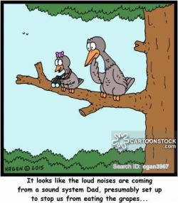 Noise clipart funny bird