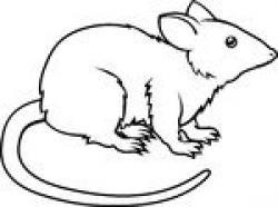 Nutria clipart rat