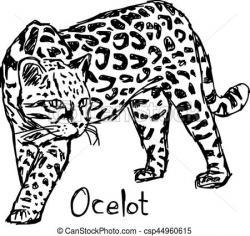 Ocelot clipart carnivore