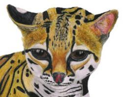 Ocelot clipart cat
