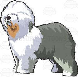 Fluffy clipart old english sheepdog