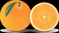 Grapefruit clipart half orange