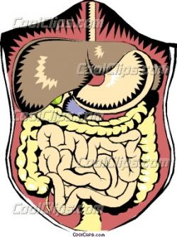 Organs clipart intestine