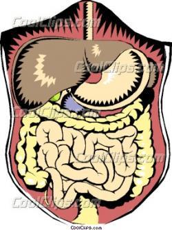 Organs clipart intestine