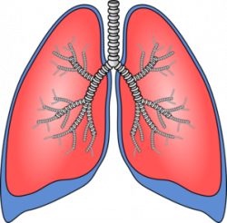 Deadth clipart tuberculosis