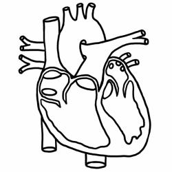 Organs clipart real heart