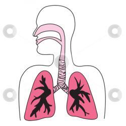 Organs clipart respiratory problem