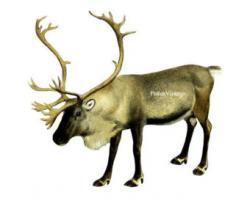 Oryx clipart deer