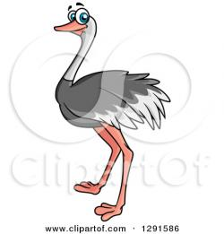 Ostrich clipart bird