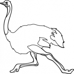 Ostrich clipart black and white