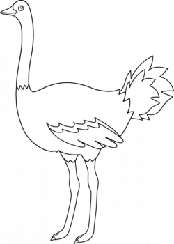 Ostrich clipart coloring page