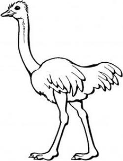 Ostrich clipart outline