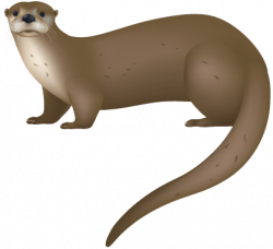 Weasel clipart river otter