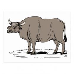 Ox clipart bullock