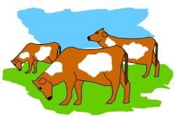 Cow clipart herd cattle