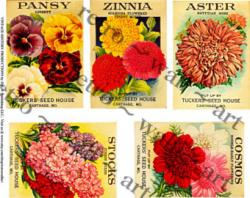 Pansy clipart gardening