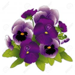 Pansy clipart purple