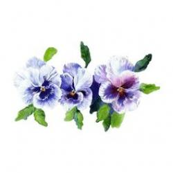 Pansy clipart swag