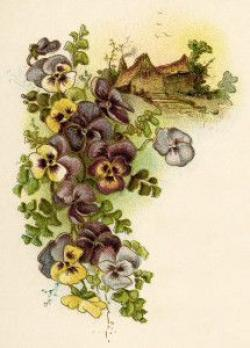 Pansy clipart vintage