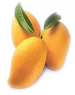 Mango clipart symbol