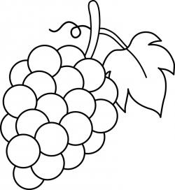 Drawn grapes simple